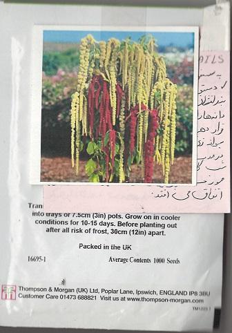 بذرهای تزئینی