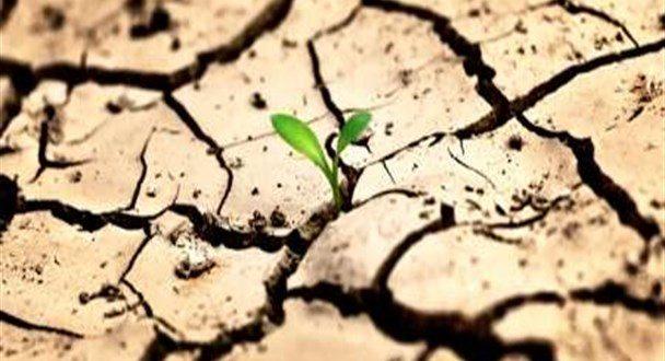 آبیاری درختان در بحران بی آبی