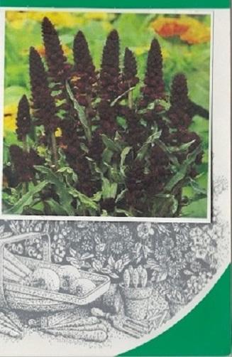 بذرهای کمیاب