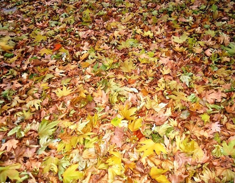 پاییز کندلوس